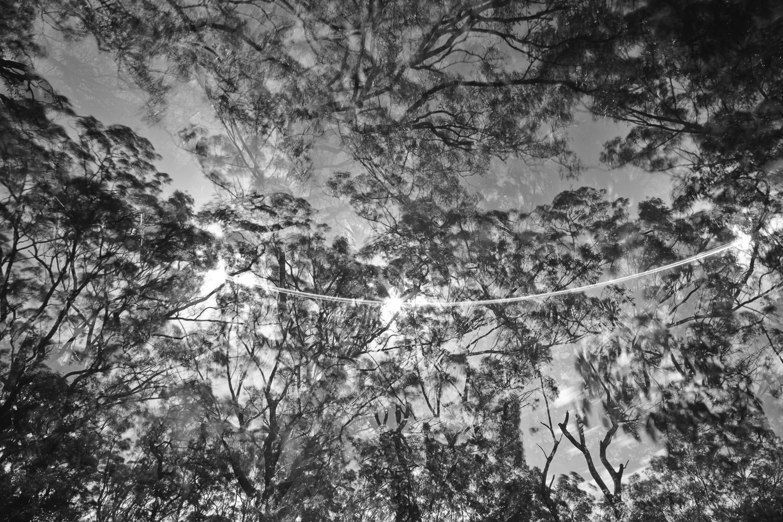 canopy-7